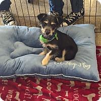 Adopt A Pet :: Ethan - Brea, CA