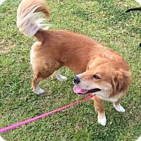 Adopt A Pet :: Zoey - Irmo, SC