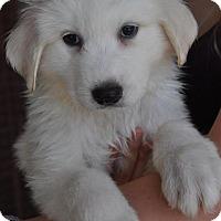 Adopt A Pet :: Lenny - Atlanta, GA