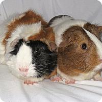 Adopt A Pet :: Twix & Sasha - Monrovia, MD