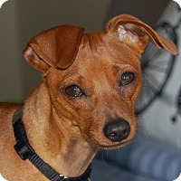 Adopt A Pet :: Ruger - Sacramento, CA