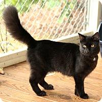 Adopt A Pet :: Nola - McCormick, SC
