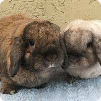 Adopt A Pet :: Sam & George - Bonita, CA