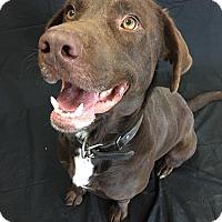 Adopt A Pet :: Evan - Midlothian, VA