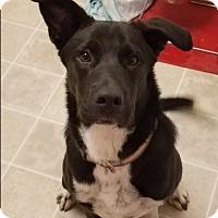 Adopt A Pet :: Rami Malek - Jersey City, NJ