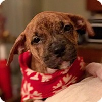 Adopt A Pet :: EDITH - Elyria, OH