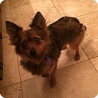 Adopt A Pet :: Kwanzaa - Sacramento, CA