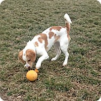 Adopt A Pet :: Emilie - Leesburg, VA