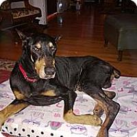 Adopt A Pet :: Gus - Allegan, MI