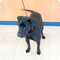 Adopt A Pet :: Charlie - Ludington, MI