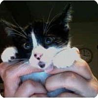 Adopt A Pet :: Sara - Davis, CA