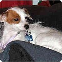 Adopt A Pet :: Tina - San Francisco, CA