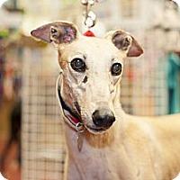 Adopt A Pet :: KB's Carmine