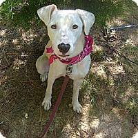 Adopt A Pet :: Little Angeline - Eden, NC