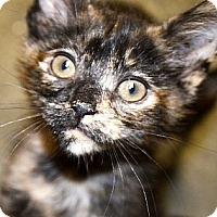 Adopt A Pet :: Allie - Xenia, OH