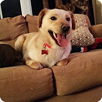 Adopt A Pet :: Sunny - Pierrefonds, QC
