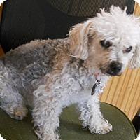 Adopt A Pet :: Lucy - dewey, AZ