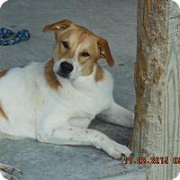 Adopt A Pet :: Ray Prison Prog. Dog - Hartford, KY