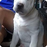 Adopt A Pet :: Baby Buddha - Smyrna, GA