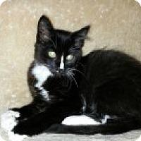 Adopt A Pet :: Blaze - McHenry, IL
