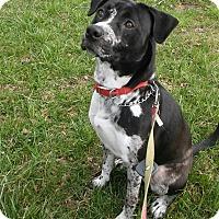 Adopt A Pet :: Jitterbug - Waldorf, MD