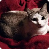Adopt A Pet :: Marshmallow - Ashland, OH