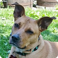 Adopt A Pet :: Janell - PENDING - Grafton, WI
