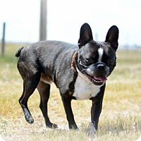 Adopt A Pet :: Paxil - Cheyenne, WY