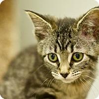 Adopt A Pet :: Minnie - Great Falls, MT