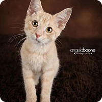 Adopt A Pet :: Tickles C1432 - Shakopee, MN