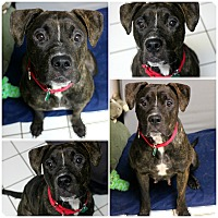 Adopt A Pet :: Princess - Forked River, NJ