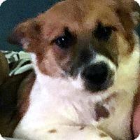 Adopt A Pet :: Trixie DeLuxx - Detroit, MI