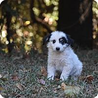 Adopt A Pet :: Panda - Groton, MA