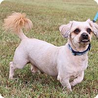 Adopt A Pet :: Bruno ~meet me!~ - Glastonbury, CT