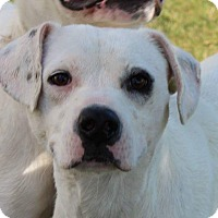 Adopt A Pet :: Petey - Estill springs, TN