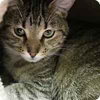 Adopt A Pet :: Ruby - Medina, OH