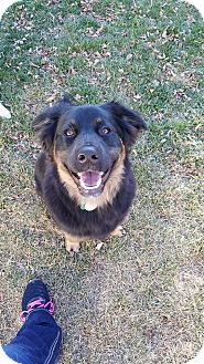 Collie/Shepherd (Unknown Type) Mix Dog for adoption in Duchess, Alberta - Hobbs