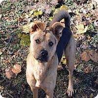 Adopt A Pet :: SHASTA - Atlanta, GA