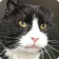 Adopt A Pet :: Big Benny - Clayville, RI