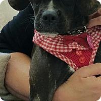 Adopt A Pet :: Marley - Carlsbad, CA