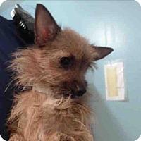 Adopt A Pet :: Cee Cee - Encino, CA