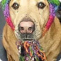 Adopt A Pet :: Hank - Villa Rica, GA