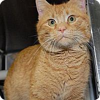 Adopt A Pet :: Snapple - Eagan, MN