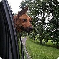 Adopt A Pet :: Vanna - Morgantown, WV
