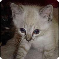 Adopt A Pet :: Sydney - Davis, CA