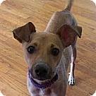 Adopt A Pet :: Spero