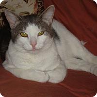 Adopt A Pet :: Larson - Bentonville, AR