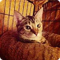 Adopt A Pet :: Allie - Alamo, CA