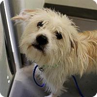 Adopt A Pet :: Becky - Atlanta, GA