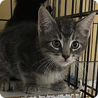 Adopt A Pet :: JoJo - Island Park, NY
